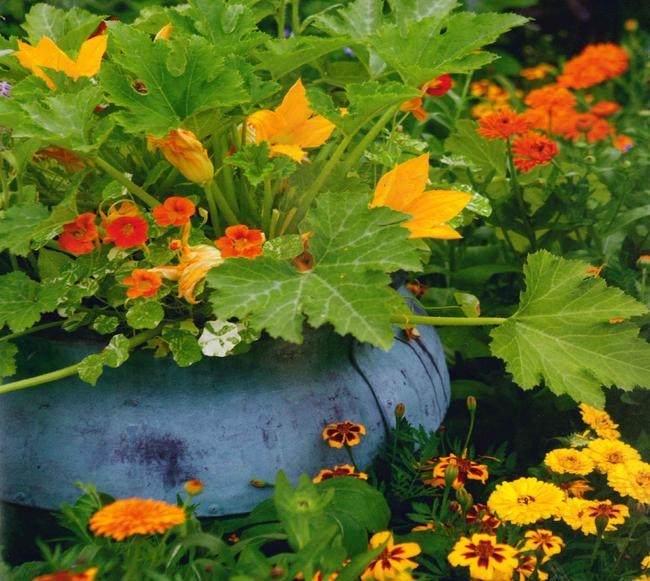 Vừa muốn có rau ăn lại có thêm màu sắc và vẻ đẹp cho không gian vườn nhà, hãy thử trồng một số loại hoa ăn được. Bạn có thể sử dụng chúng trong món salad, để trang trí bữa ăn của bạn.