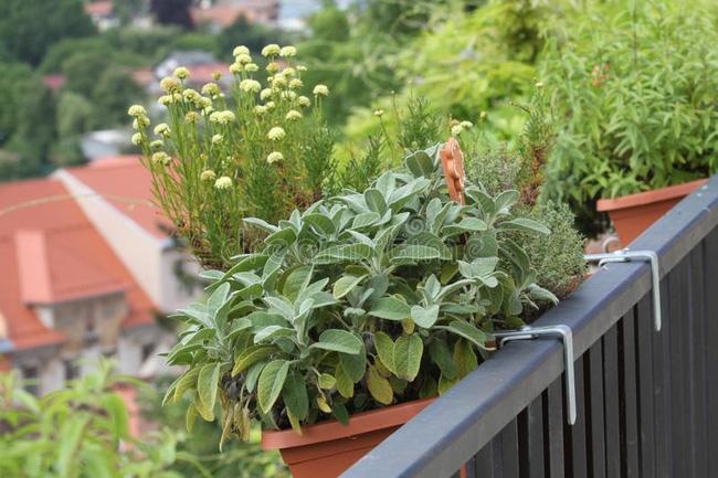 Vườn rau của bạn có thể trông không hoàn chỉnh nếu bạn không trồng một số loại thảo mộc. Các loại thảo mộc tươi có thể làm tăng hương vị của bữa ăn của bạn, vì vậy trồng nó luôn là ý tưởng tuyệt vời. Bạn không cần phải trồng tất cả các loại thảo mộc, xem xét thêm 2-3 cây mà bạn thích nhất và phù hợp với vị trí là ổn. Rau mùi tây, húng tây, bạc hà, cây xô thơm, lá oregano, rau mùi… rất nhiều loại cho bạn tha hồ sử dụng.