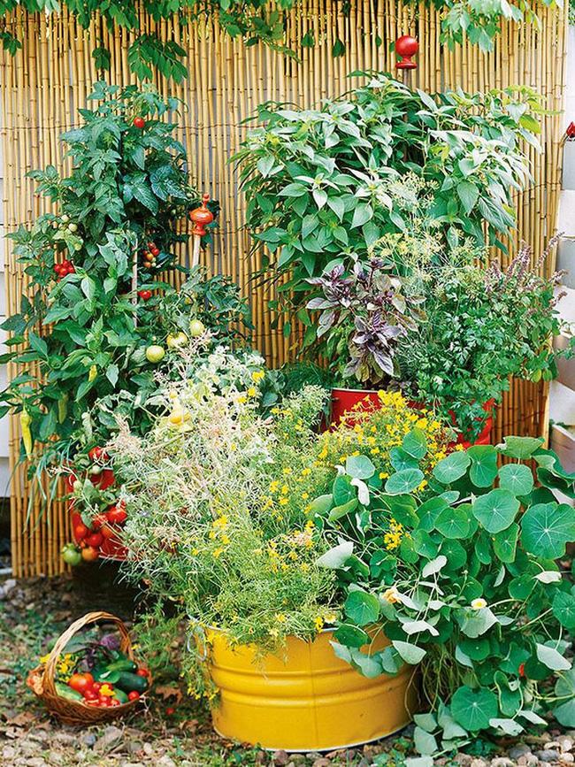 Rau và thảo mộc với kết cấu khác nhau, tán lá hấp dẫn và màu sắc có thể là một sự bổ sung tuyệt vời cho vườn rau của bạn. Ớt cay đỏ, củ cải đỏ, húng quế, lá hương thảo mịn với các loại thảo mộc khác như sả hoặc húng tây có thể làm cho khu vườn của bạn hấp dẫn hơn.