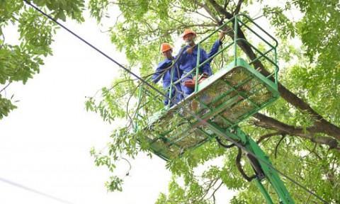 Hà Nội: Tập trung mở rộng hệ thống cây xanh, giữ gìn cảnh quan đô thị