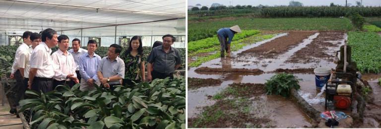 Hình 3 : Mô hình trồng hoa lan công nghệ cao tại xã Thụy Hương 2016 và cánh đồng manh mún tưới nước bằng giếng khoan của gia đình bà Hương,cũng tại xã Thụy Hương (trích trong VIDEO chiếu trong Hội nghị Nông Nghiệp tại Lâm Đồng ngày 30/7/2018)
