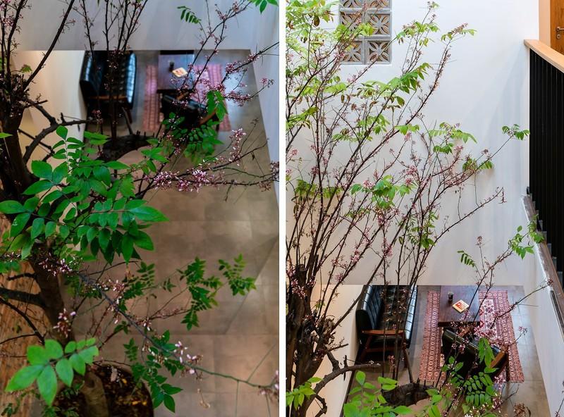 Cây khế được trồng giữa giếng trời là điểm nhấn cho Gạo house