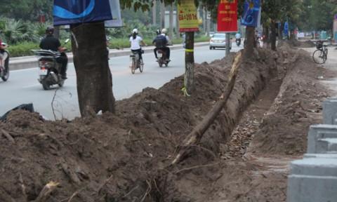 Xử lý nghiêm việc thi công chỉnh trang hè đường gây ảnh hưởng đến cây xanh