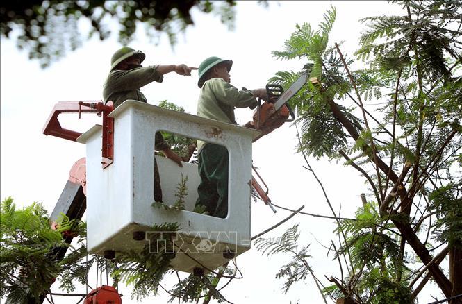 Cắt tỉa cây xanh để đảm bảo an toàn. Ảnh minh họa: An Đăng/TTXVN