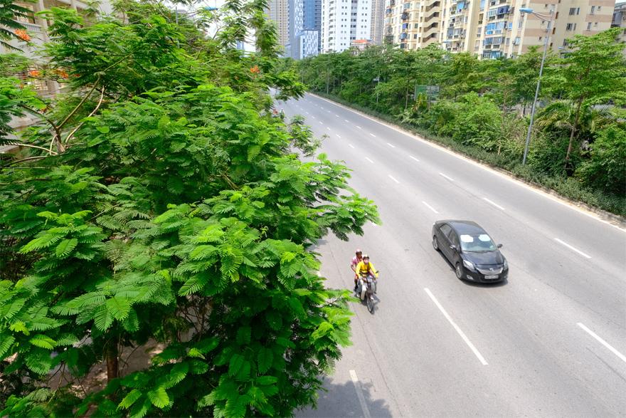 Hệ thống cây xanh trên đường Võ Chí Công phát triển tươi tốt