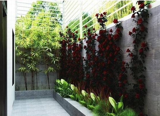 Thiết kế sân vườn nhỏ đẹp, đơn giản theo phong cách Châu Âu hiện đại.