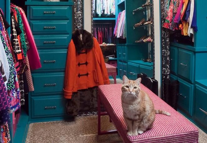 Closet không chỉ là nơi chứa quần áo mà còn có thể cho bạn cảm hứng để mặc đẹp mỗi ngày