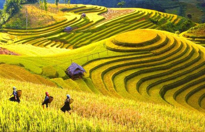 Không chỉ mang lại thu nhập về nông nghiệp mà về du lịch ruộng bậc thang vùng cao cũng khẳng định được giá trị của mình - Nguồn ảnh: Internet