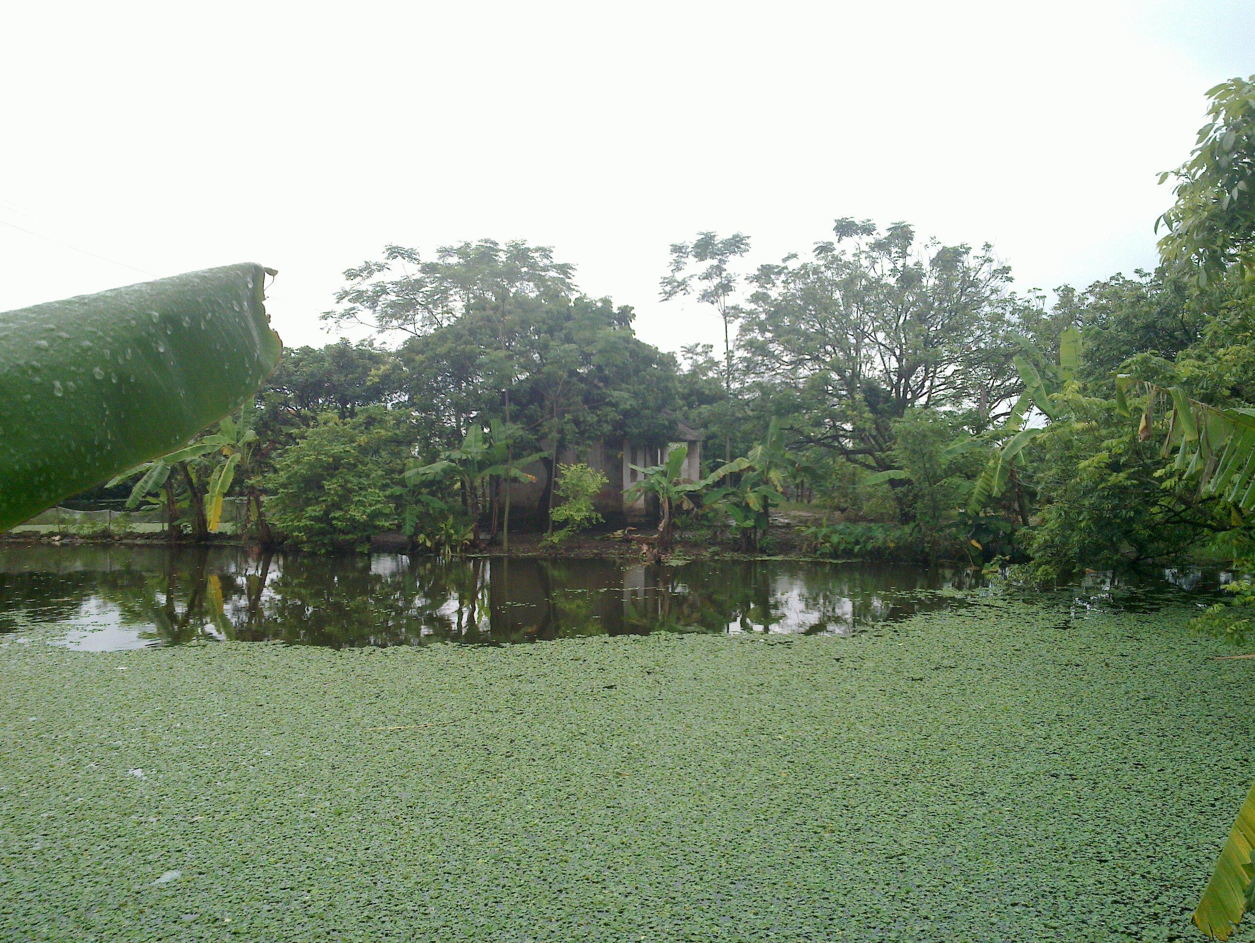 Quy hoạch lưu giữ ao hồ tạo cân bằng sinh thái