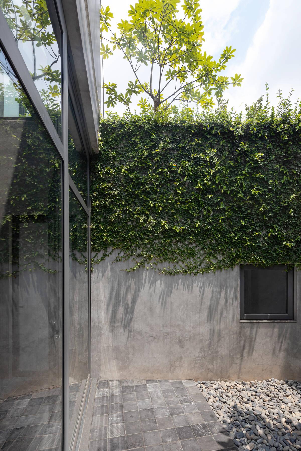 Những mảng tường với cây thân leo giúp giảm bớt lượng nhiệt âm tường