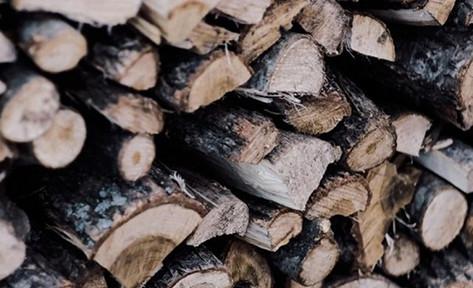 Biến gỗ trong suốt trở thành vật liệu xây dựng tiết kiệm năng lượng