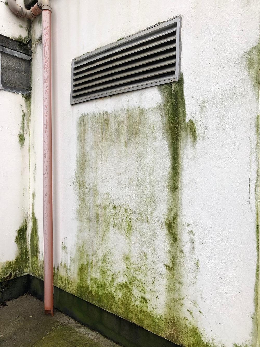 Thời tiết khắc nghiệt khiến cho tường nhà dễ xuống cấp, hư hại