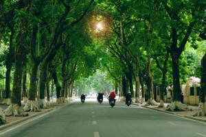 Trồng cây xanh đô thị: Không thể tùy tiện
