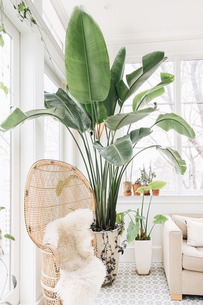 Bohemian_Chair_and_Indoor_Plant_via_emersonthoreau_1
