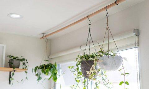 Ý tưởng trồng cây treo để mang đến vẻ đẹp cho mọi không gian (P2)