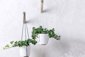 Ý tưởng trồng cây treo để mang đến vẻ đẹp cho mọi không gian (P1)